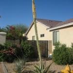 cactusflowerkillingcactusSm